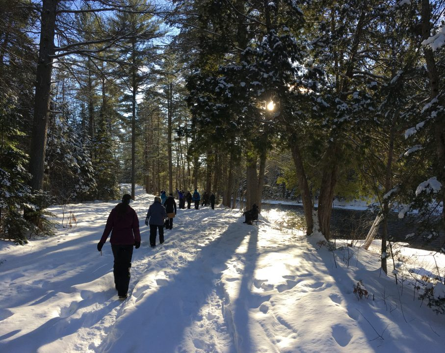 Photograph of students walking through the woods in winter